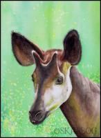 003 Okapi-skarbog
