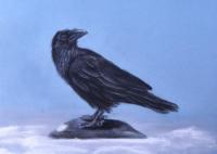 Raven Pastel A3