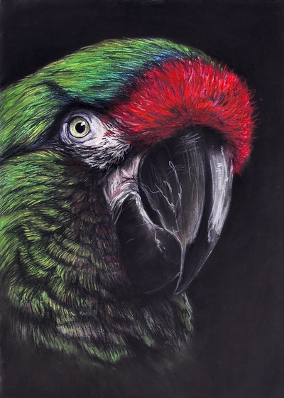 Military Macaw Pastel A3