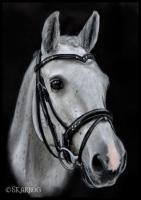 042 Groomed Horse - Skarbog