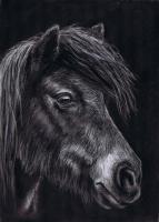 Hairy Pony